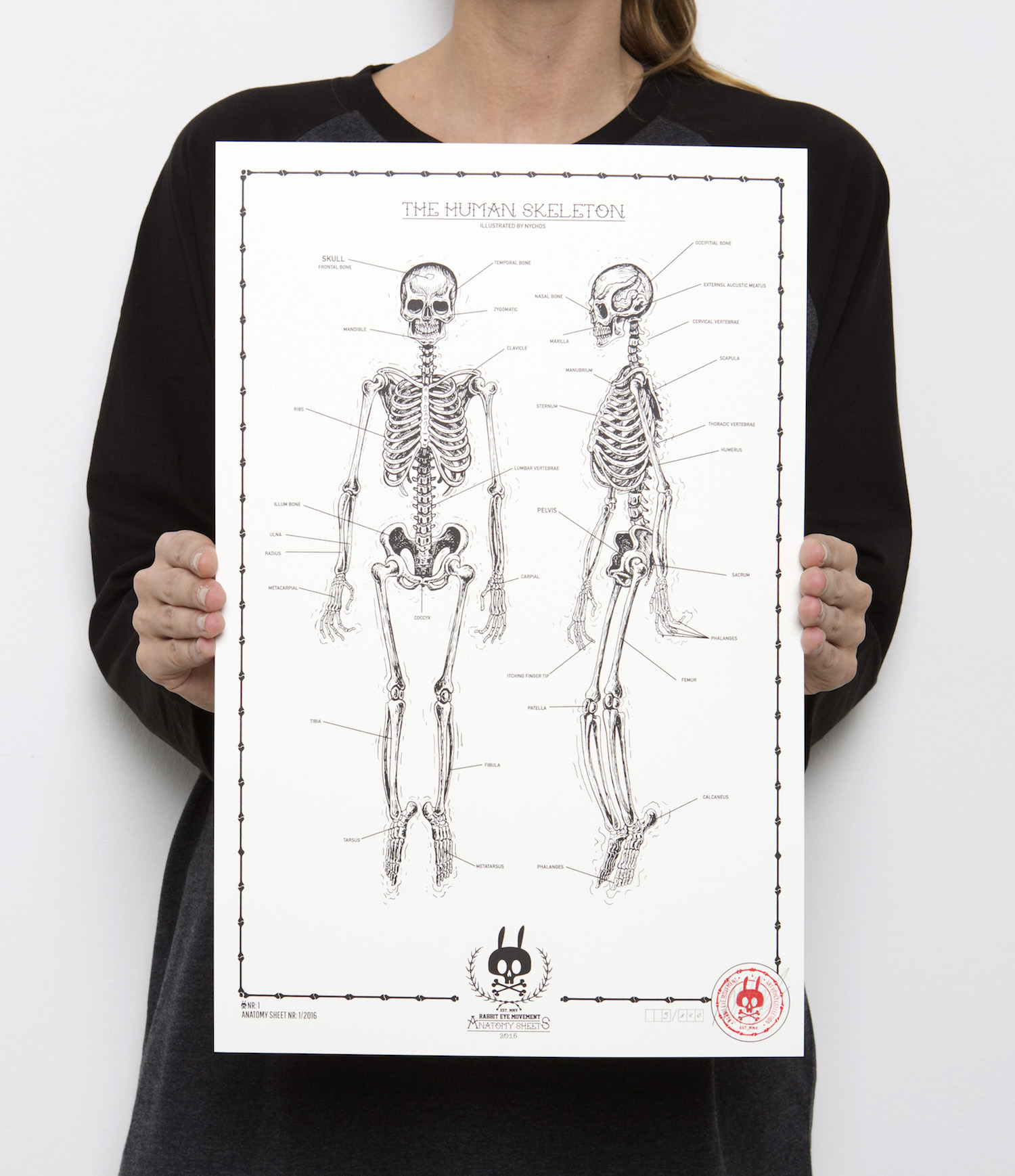 The Human Skeleton Anatomy Sheet No1 Rabbit Eye Movement Inc