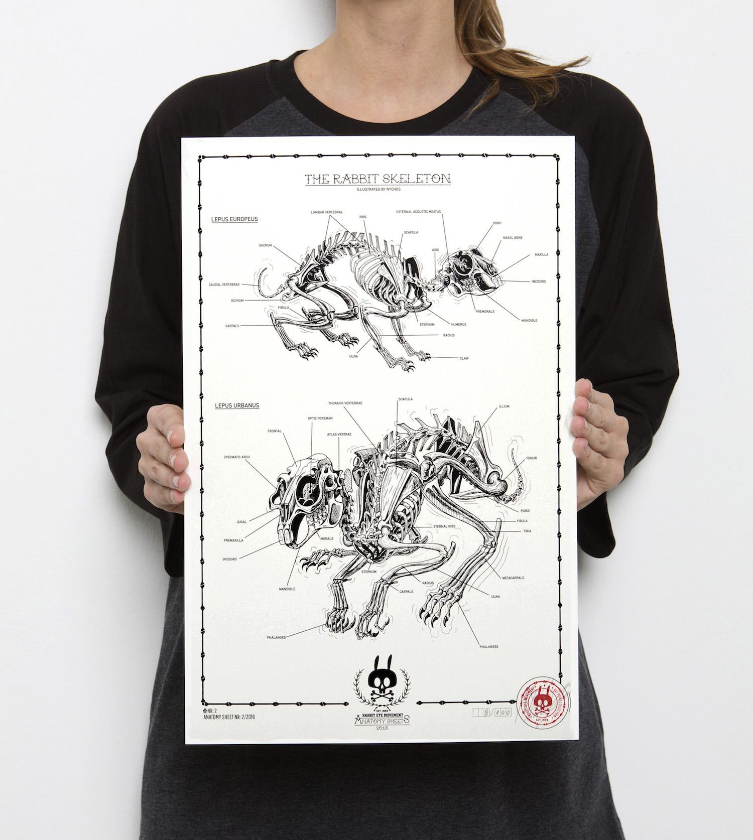 The Rabbit Skeleton Anatomy Sheet No 2 Rabbit Eye Movement Inc