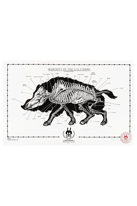 DISSECTION OF A HUMAN: ANATOMY SHEET NO. 5 - Rabbit Eye Movement Inc.