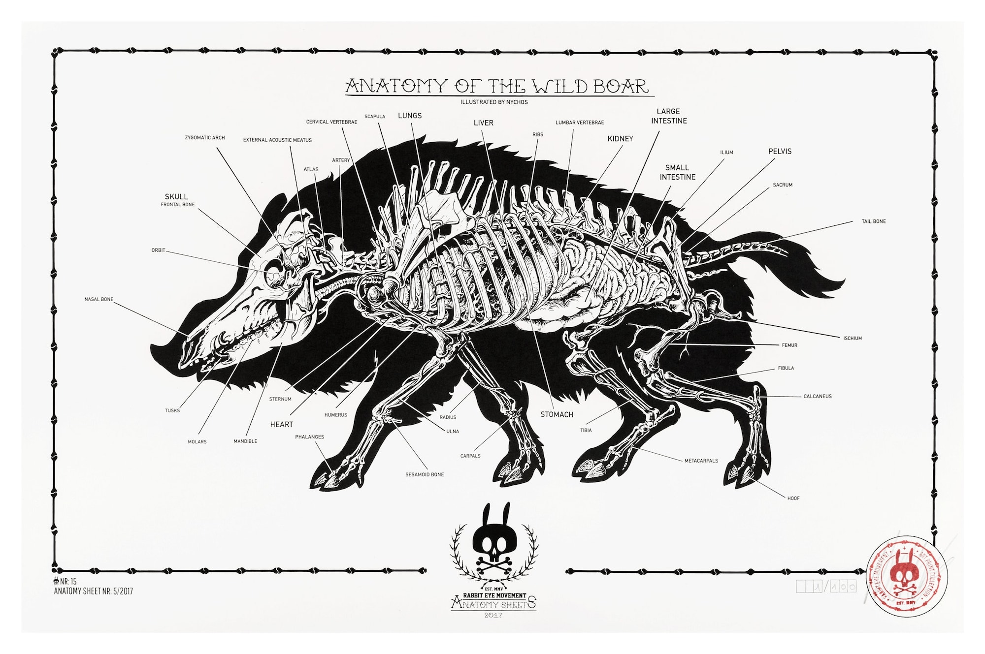 ANATOMY OF THE WILD BOAR: ANATOMY SHEET NO.15 - Rabbit Eye Movement Inc.