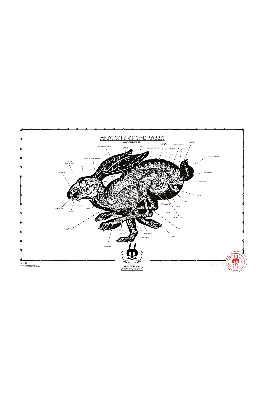 ANATOMY OF THE RABBIT: ANATOMY SHEET NO. 18 - Rabbit Eye Movement Inc.