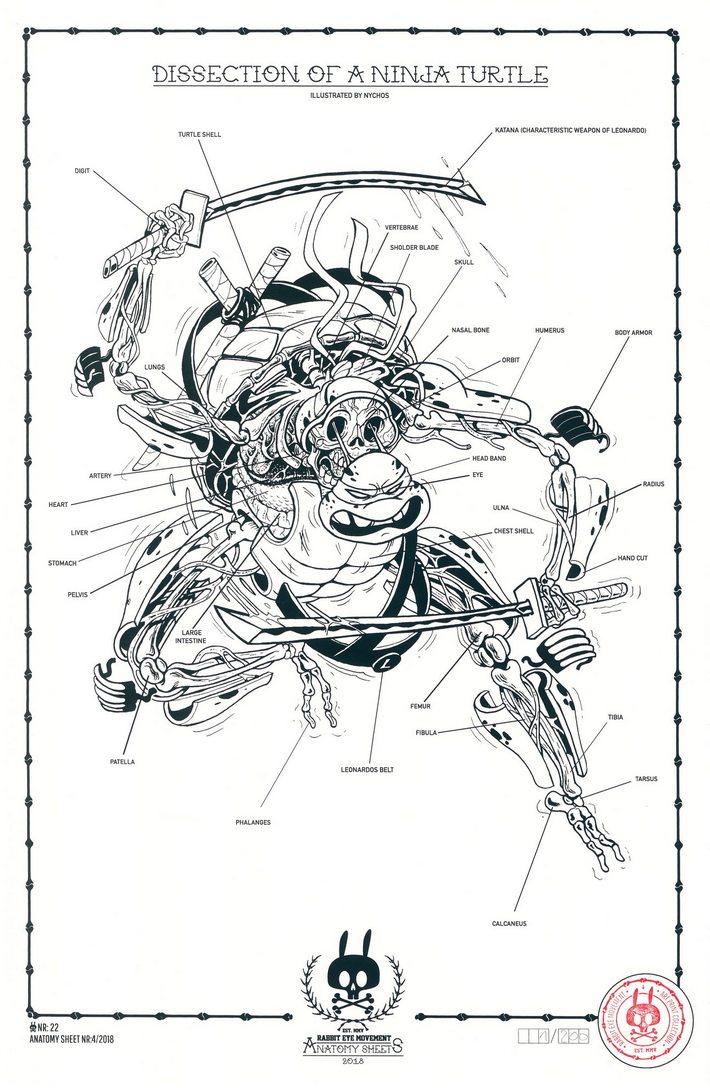 Dissection Of Ninja Turtle Anatomy Sheet No 22 Rabbit Eye